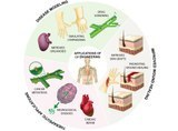 14. Lymphatic Tissue Engineering and Regeneration.